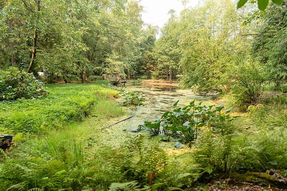 Pond with lush vegetation