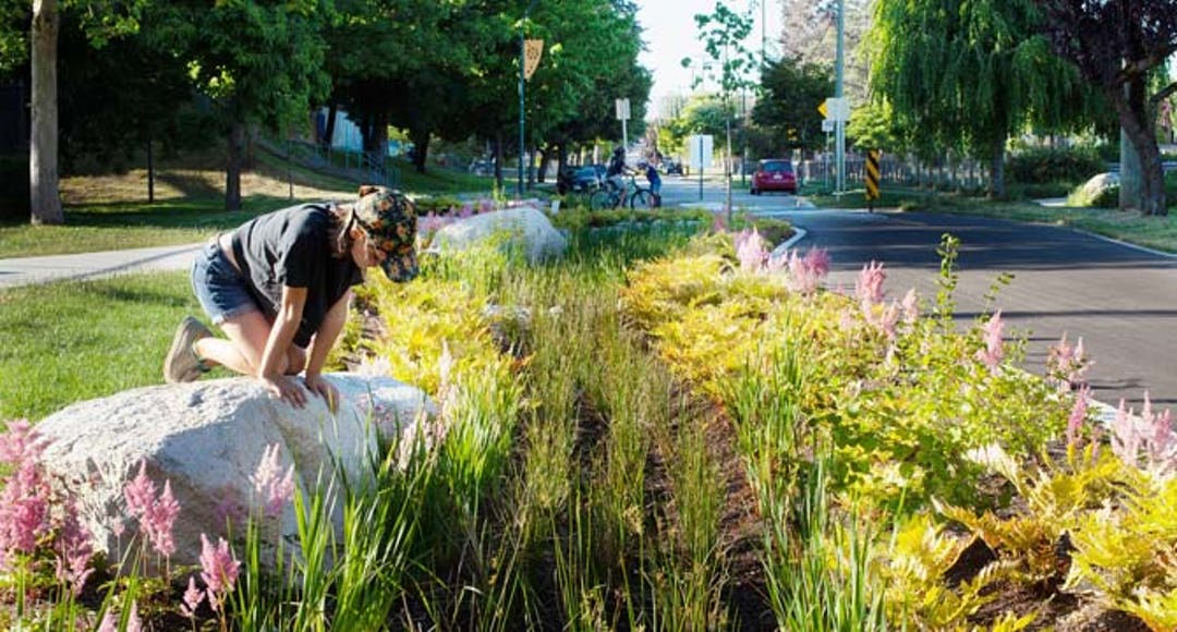 This photo of a rain garden next to a bike lane near Sunset Park is an example of what could be propose