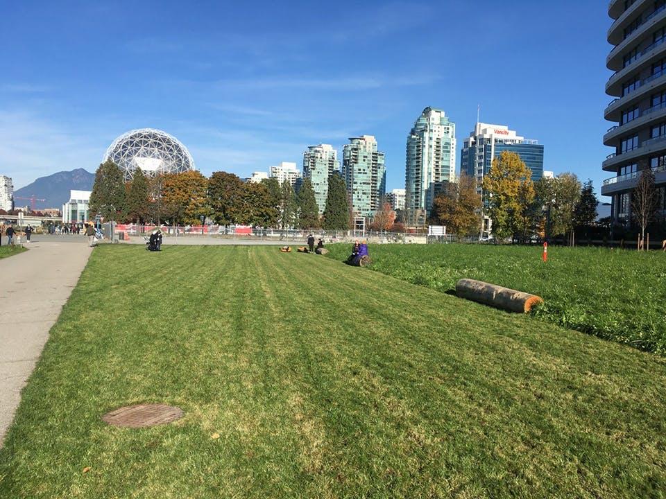 East Park Temporary Pollinator Meadow lawn area (Fall 2020)