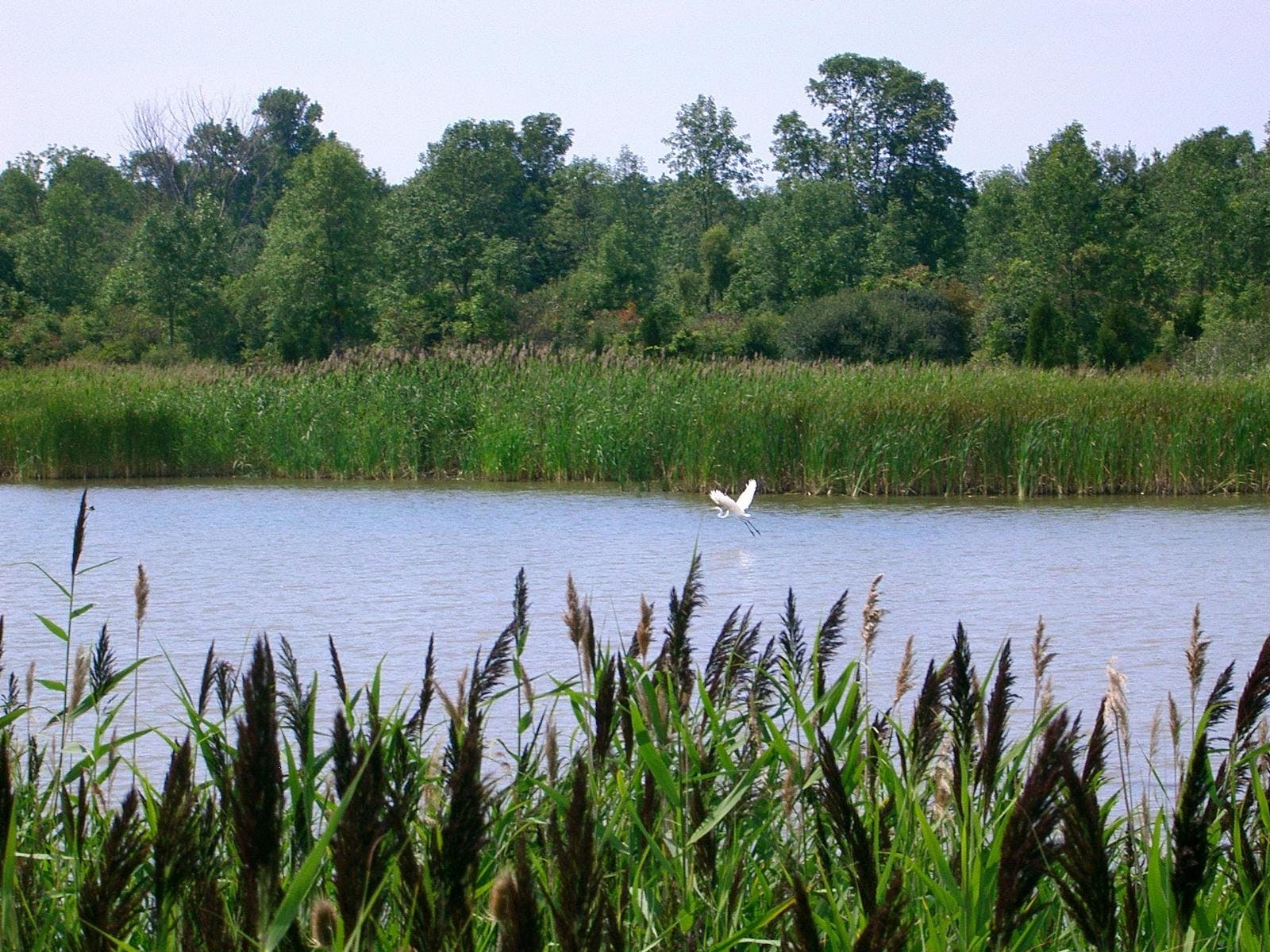 Wainfleet Wetlands