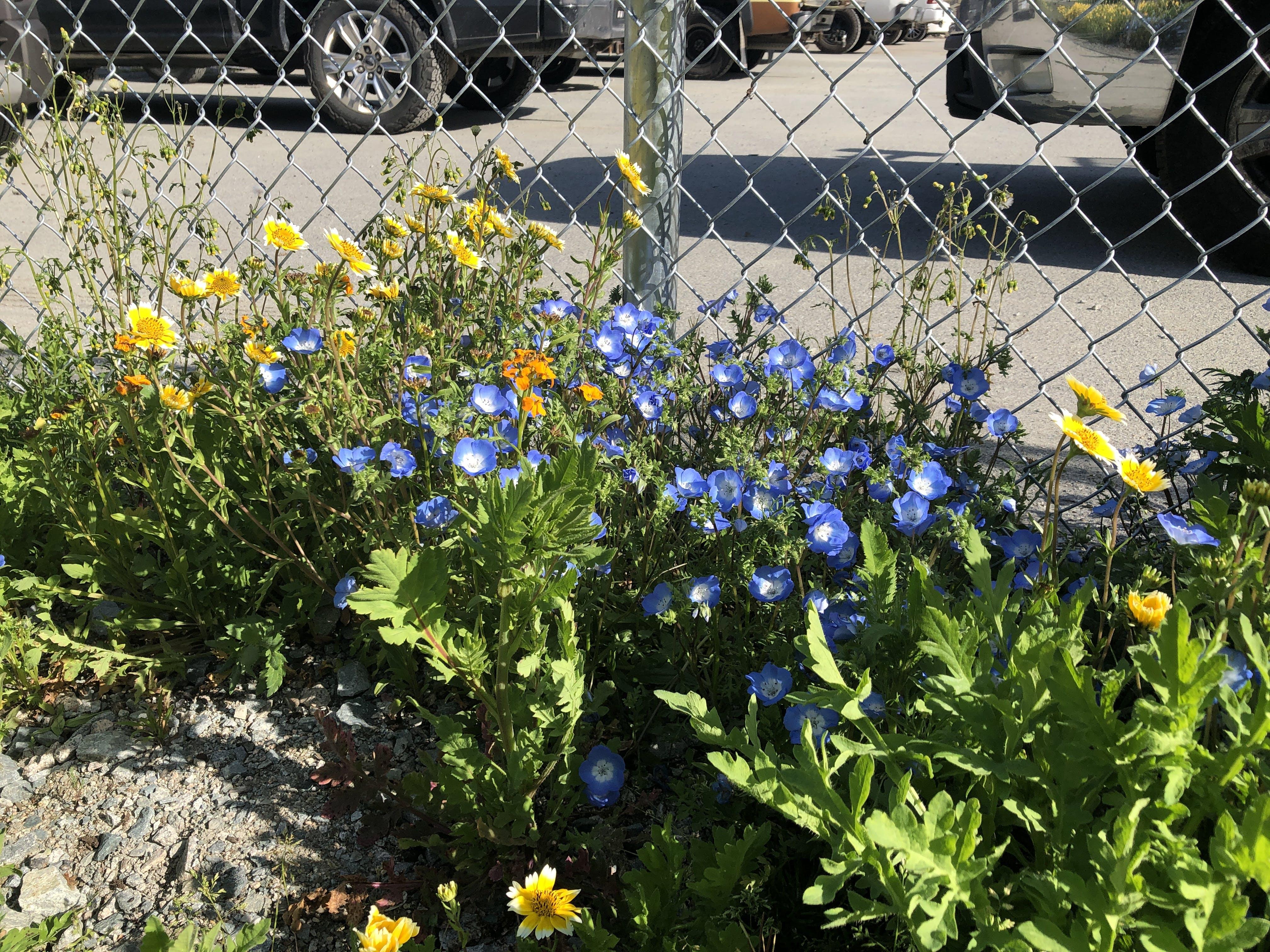 Pollinator Meadow - May 11, 2021