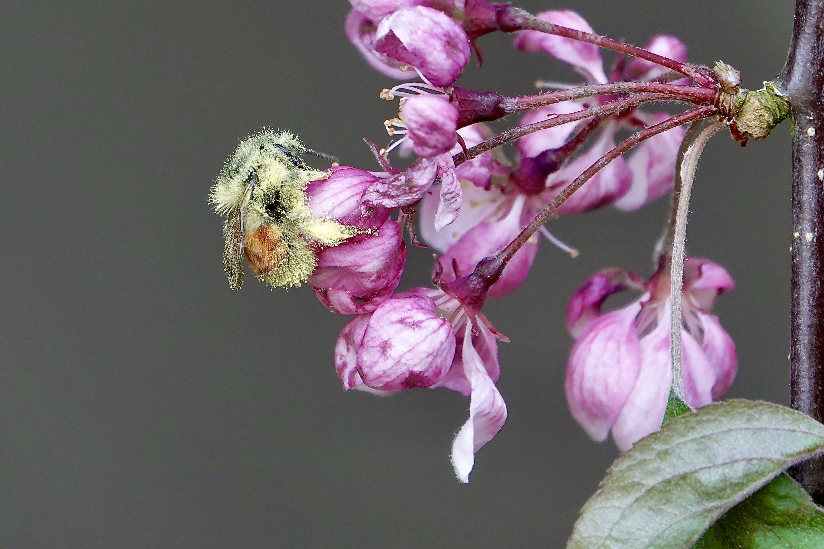 Ball of pollen