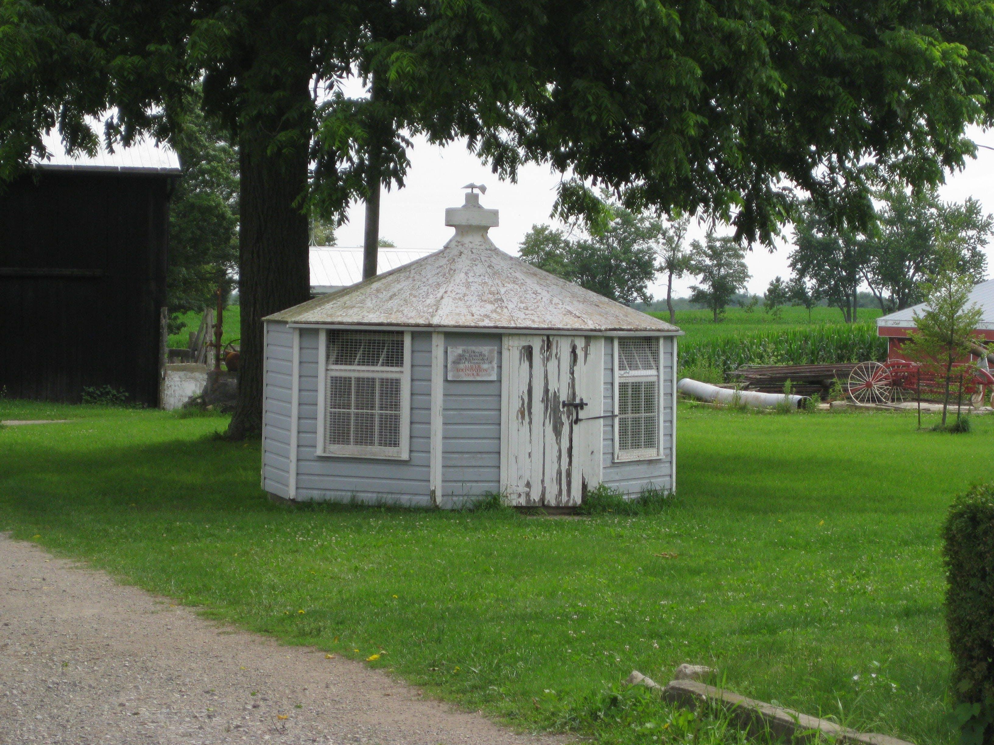Shellard Road Henhouse