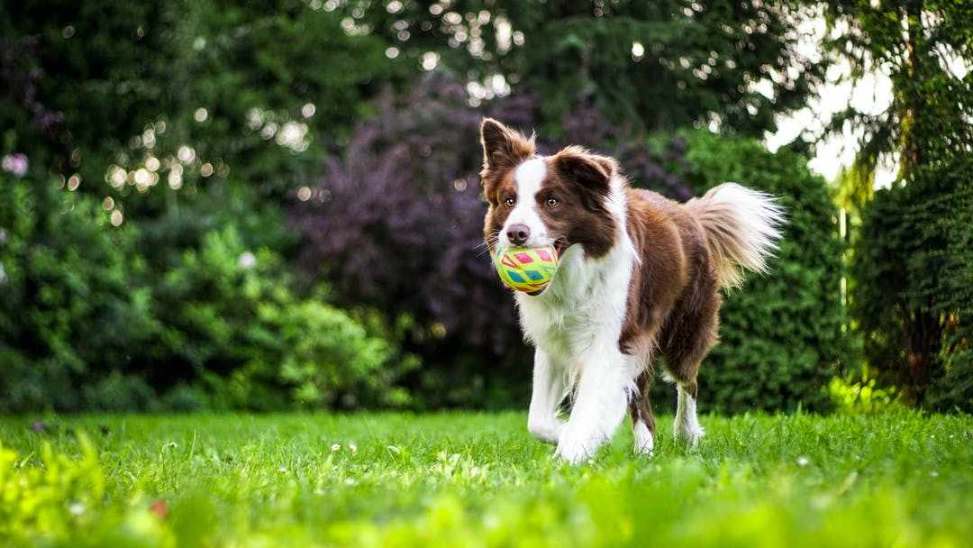 Dog with ball, photo by Anna Dudkova