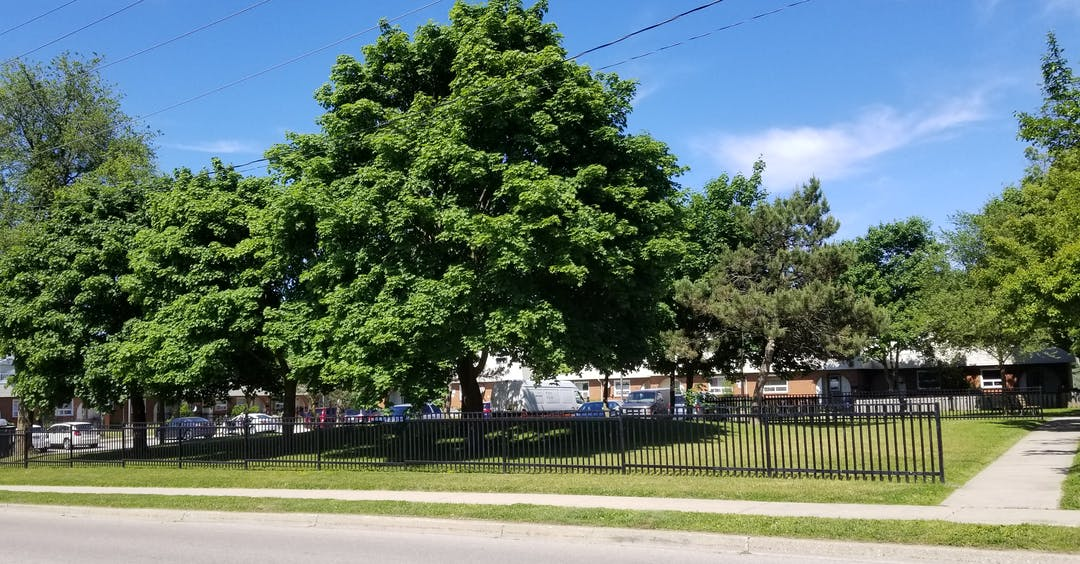 Bechtel neighbourhood with large tree in centre.