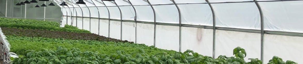 Northern Food Development Program