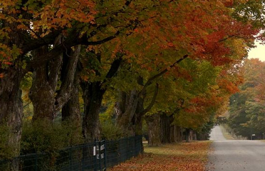 Image of a County road in the fall with leaves turning colours