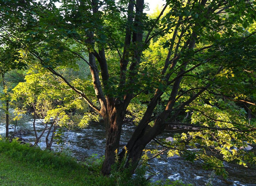 photo d'un arbre devant la rivière