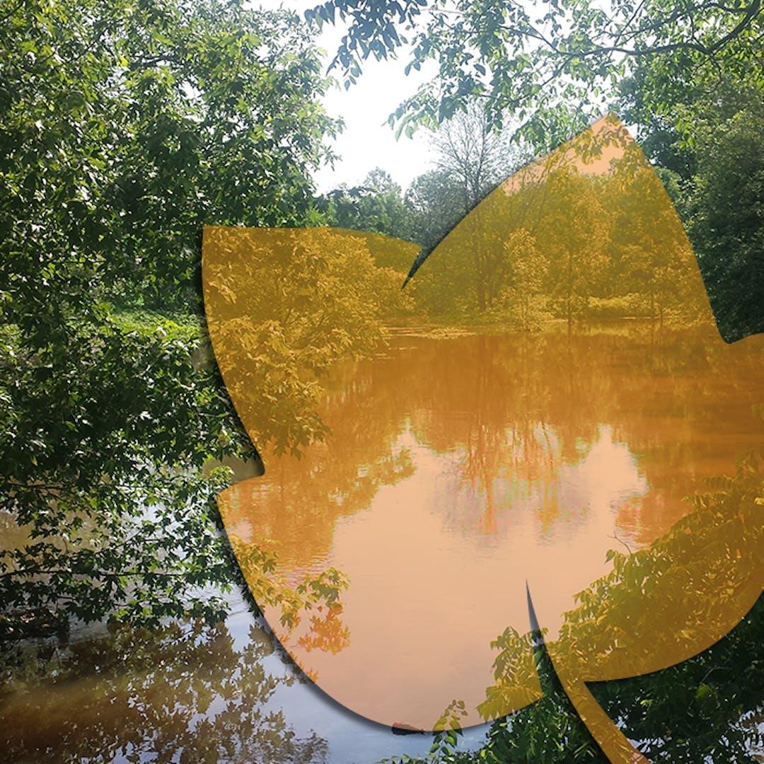 Photo of flooding in creek with orange tulip leaf