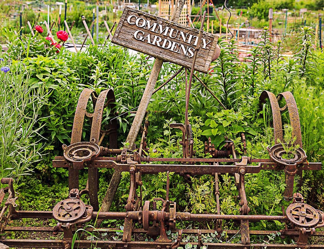 """Sign saying, """"Community Gardens"""" embedded in a rustic tractor frame, with various herbs and flowers growing in a garden in the background."""