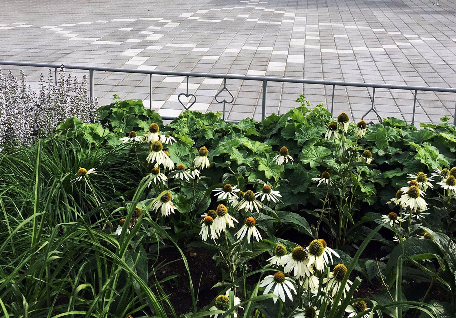 Flowering plants and seasonal interest