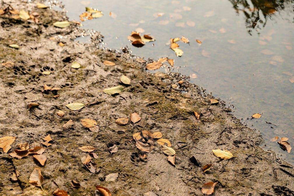 Animal tracks on the river's edge