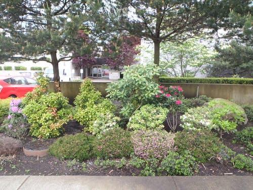 Rain gardens help detain stormwater runoff reduces drainage infrastructure upgrade requirements.