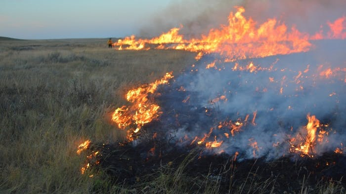 Grassland Prescribed Fire
