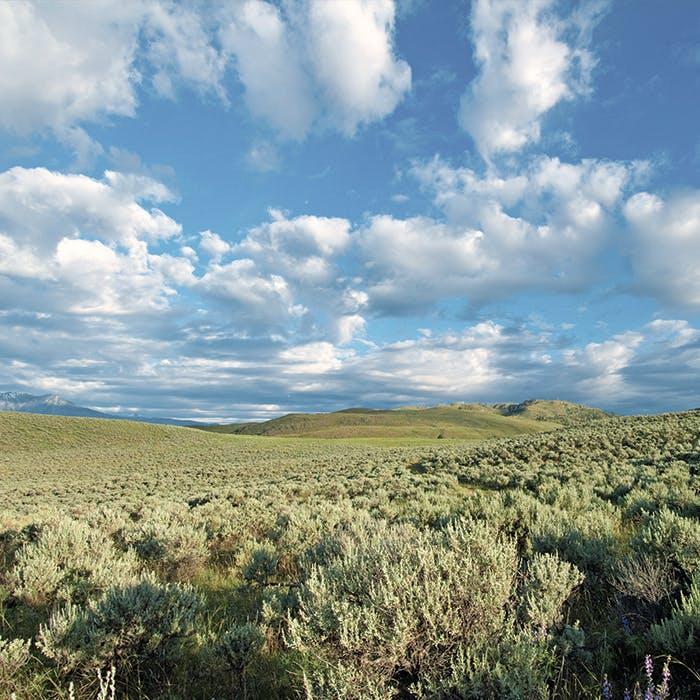 Kilpoola Grasslands Okanagan Valley
