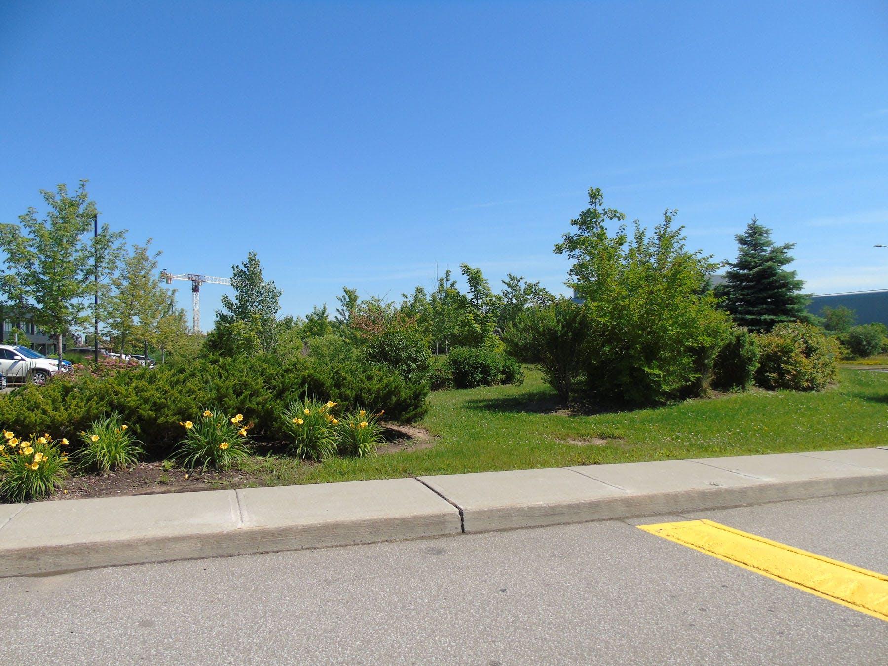Landscaping in Sheridan Park