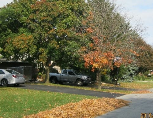 Leaves raked to the street