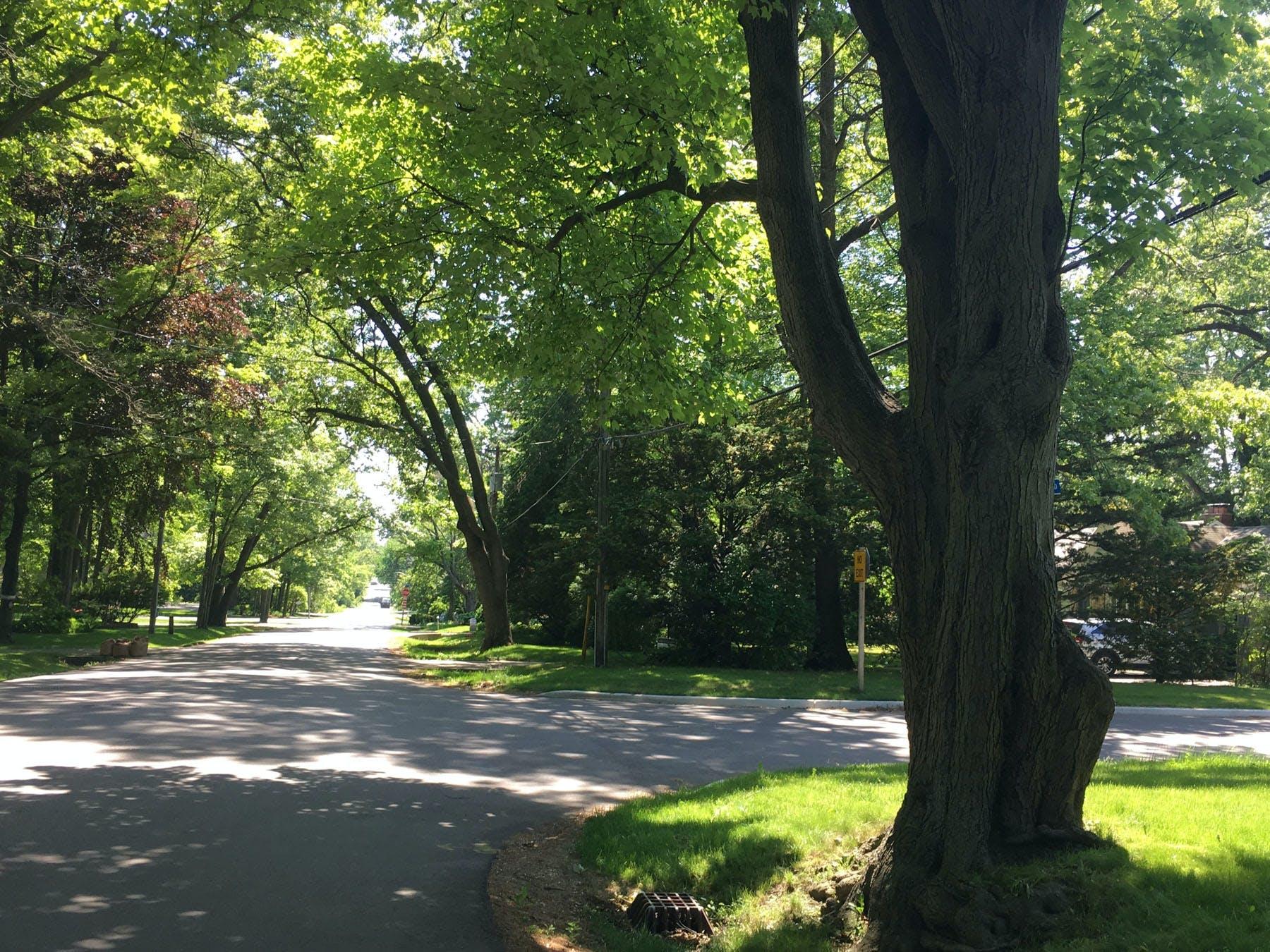 Rural and winding streetscape of Mineola Neighbourhood