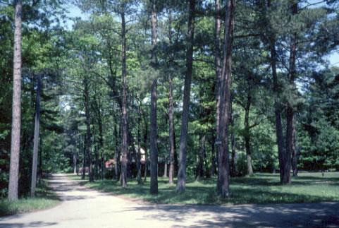 Lorne park 2