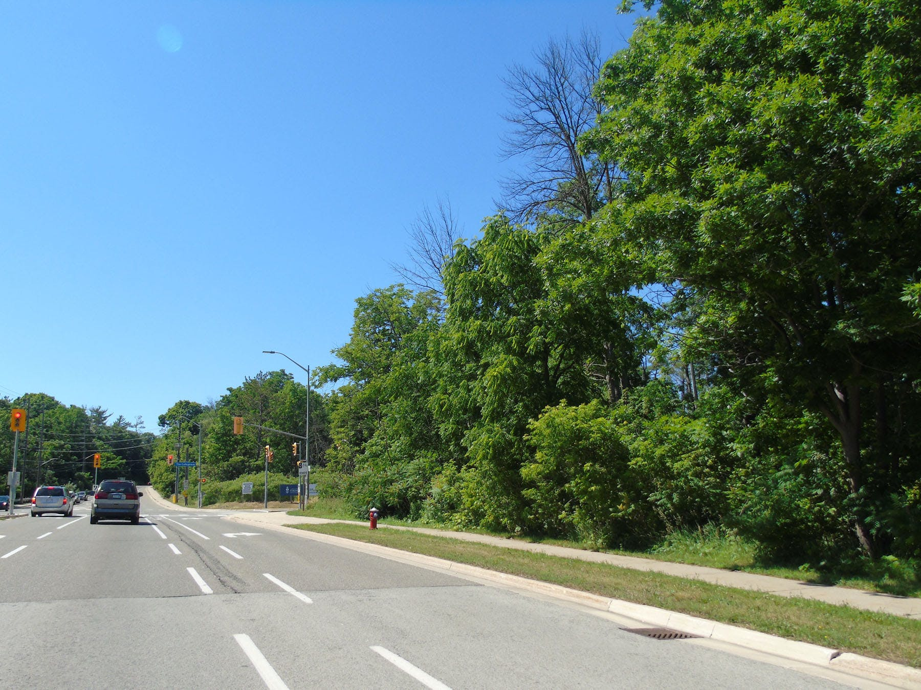 Mature street trees along Mississauga Road