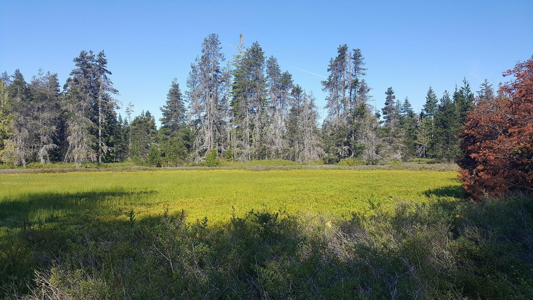 Wetland in the Big Qualicum Water Region