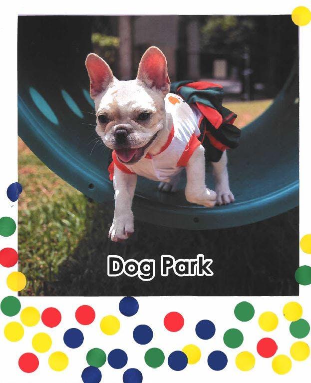 Dog Park - 38 Votes
