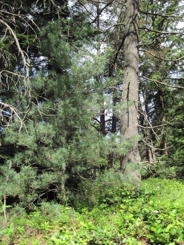 Green Bog Forest
