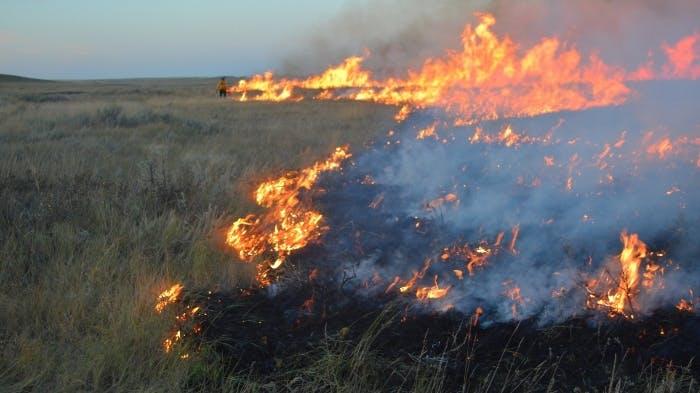 Brûlage dirigé dans les prairies
