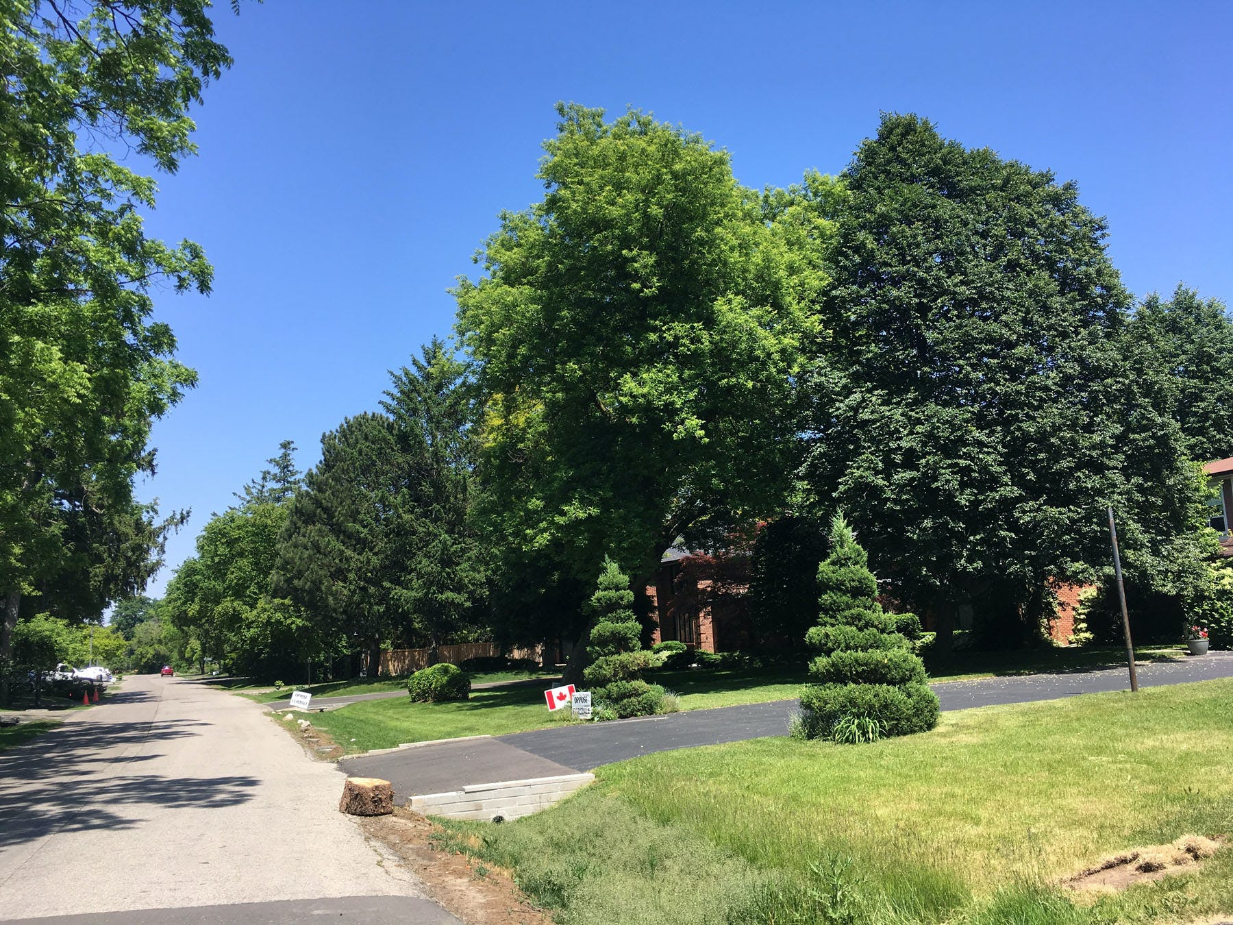 Rural streetscape and mature trees of Erindale Village