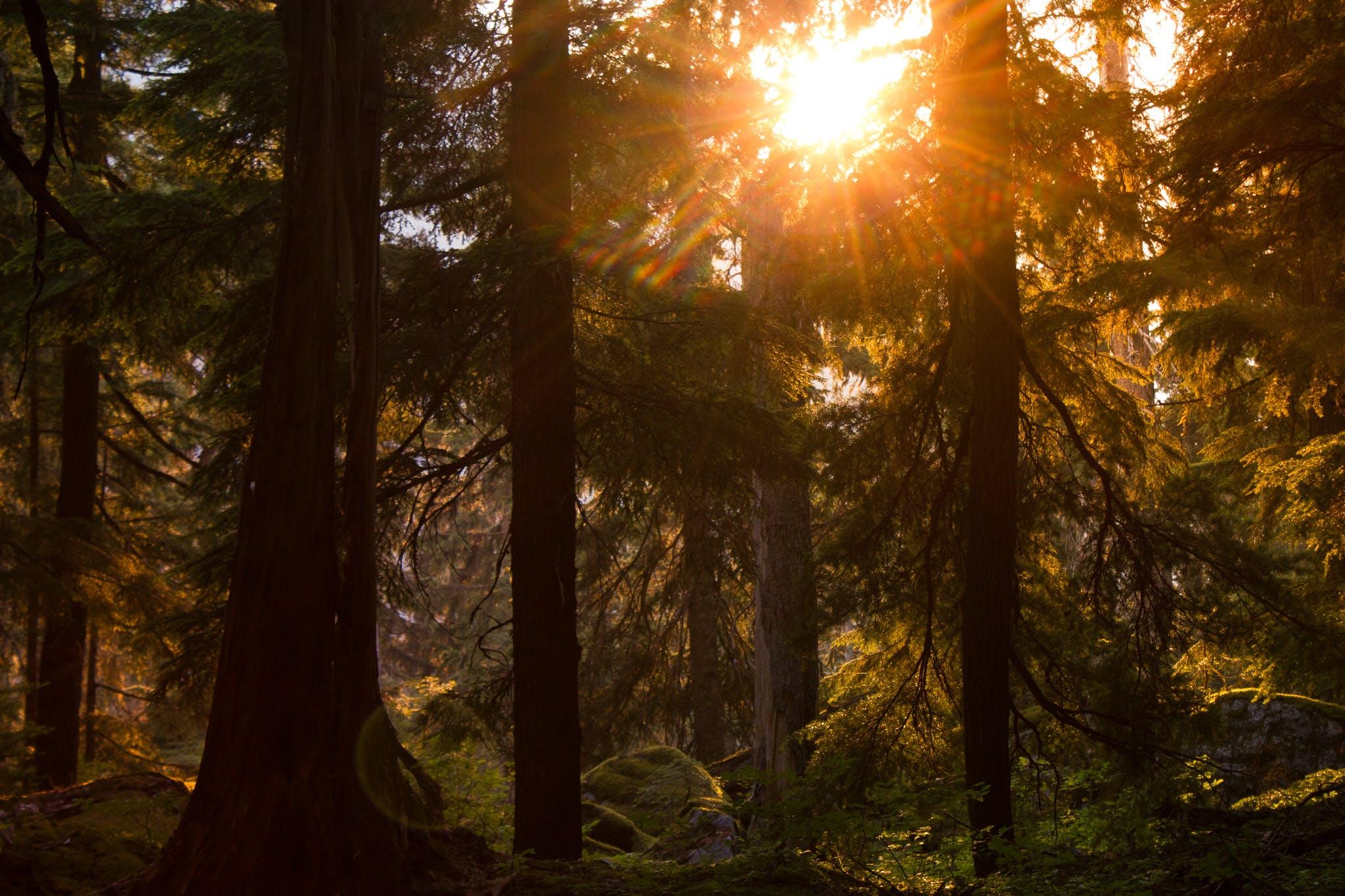 Glacier National Park's amazing forests