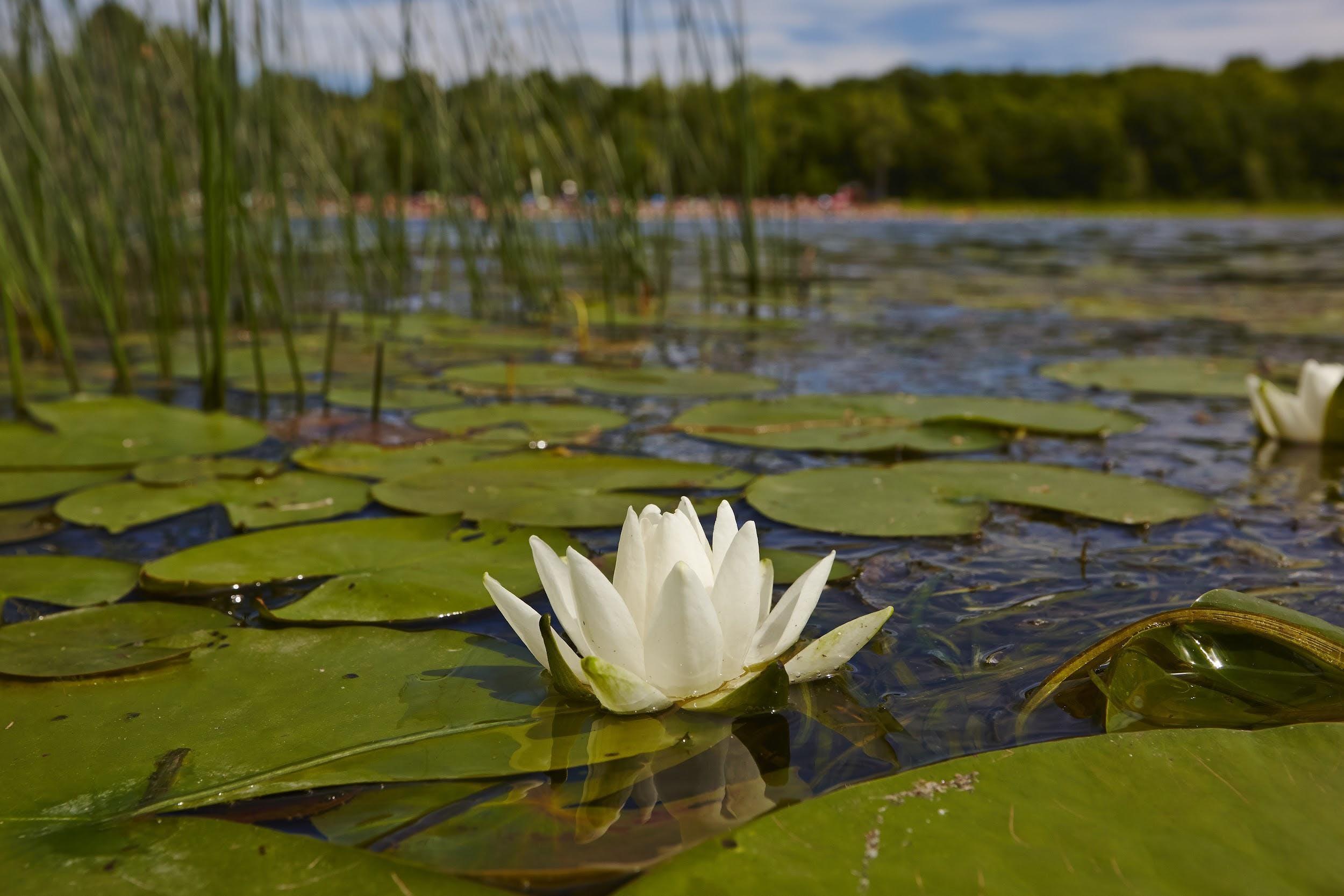Protecting wetlands