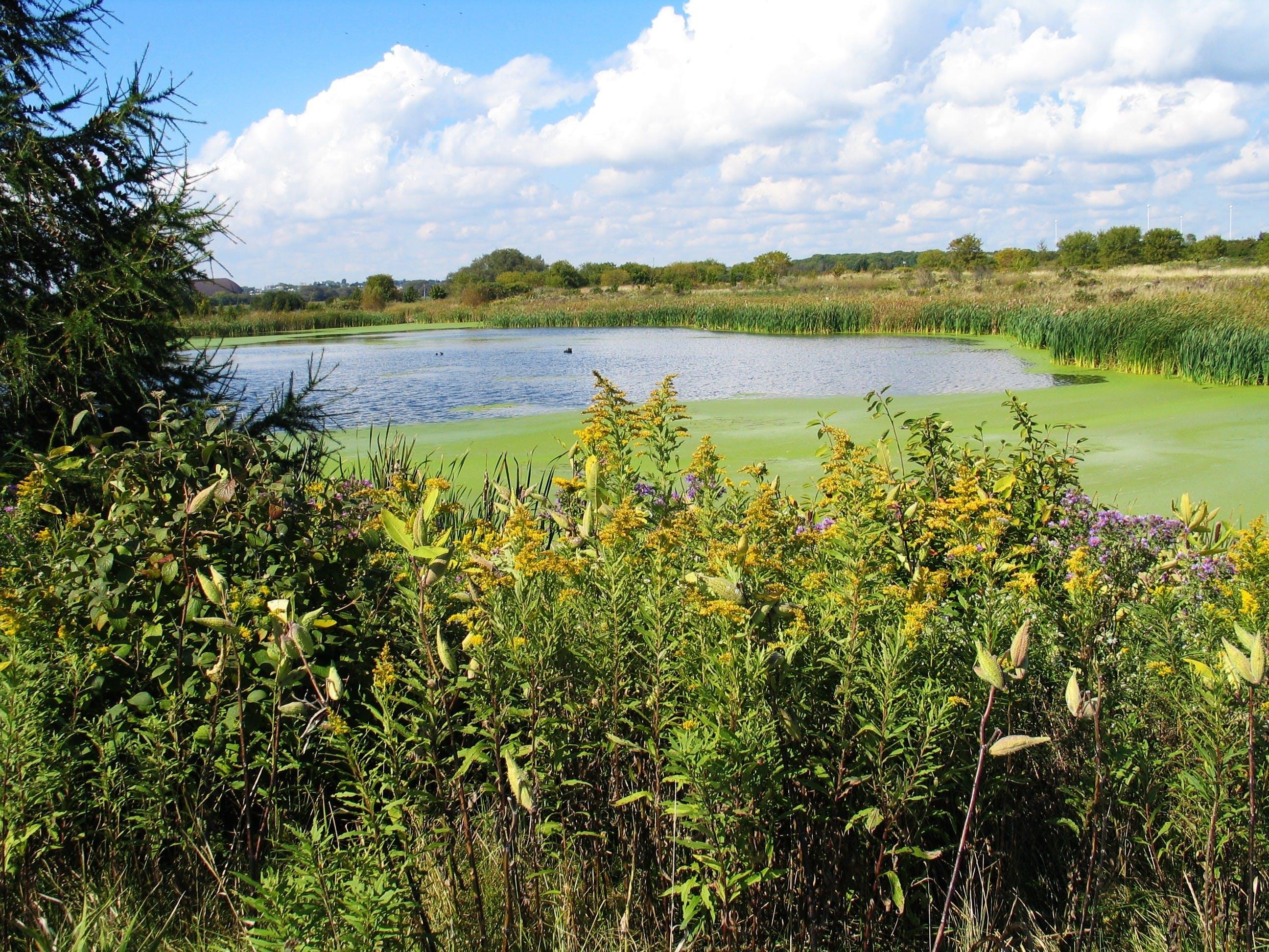 Second Marsh