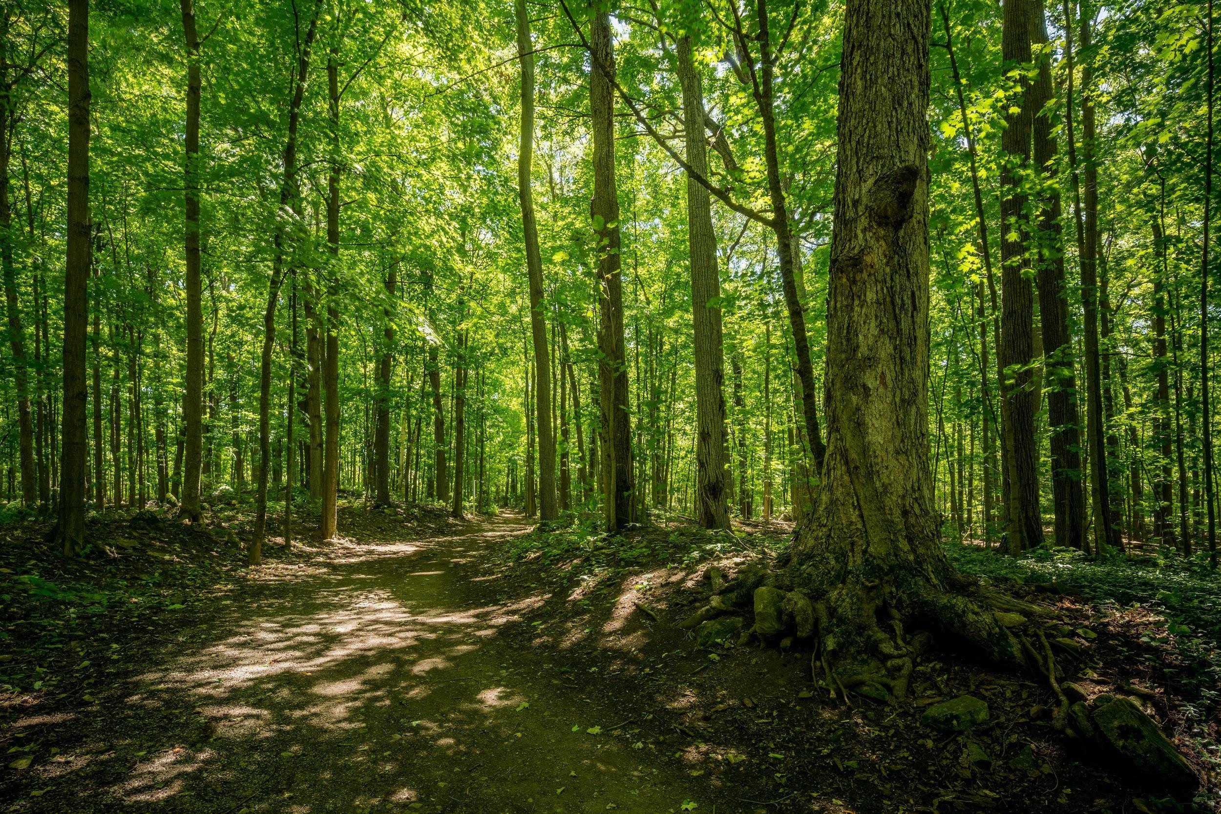 Sentier au Bois-de-l'Île-Bizard