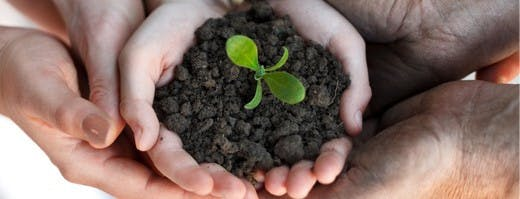 Image of hands holding soil with a small plant starting to grow in it.