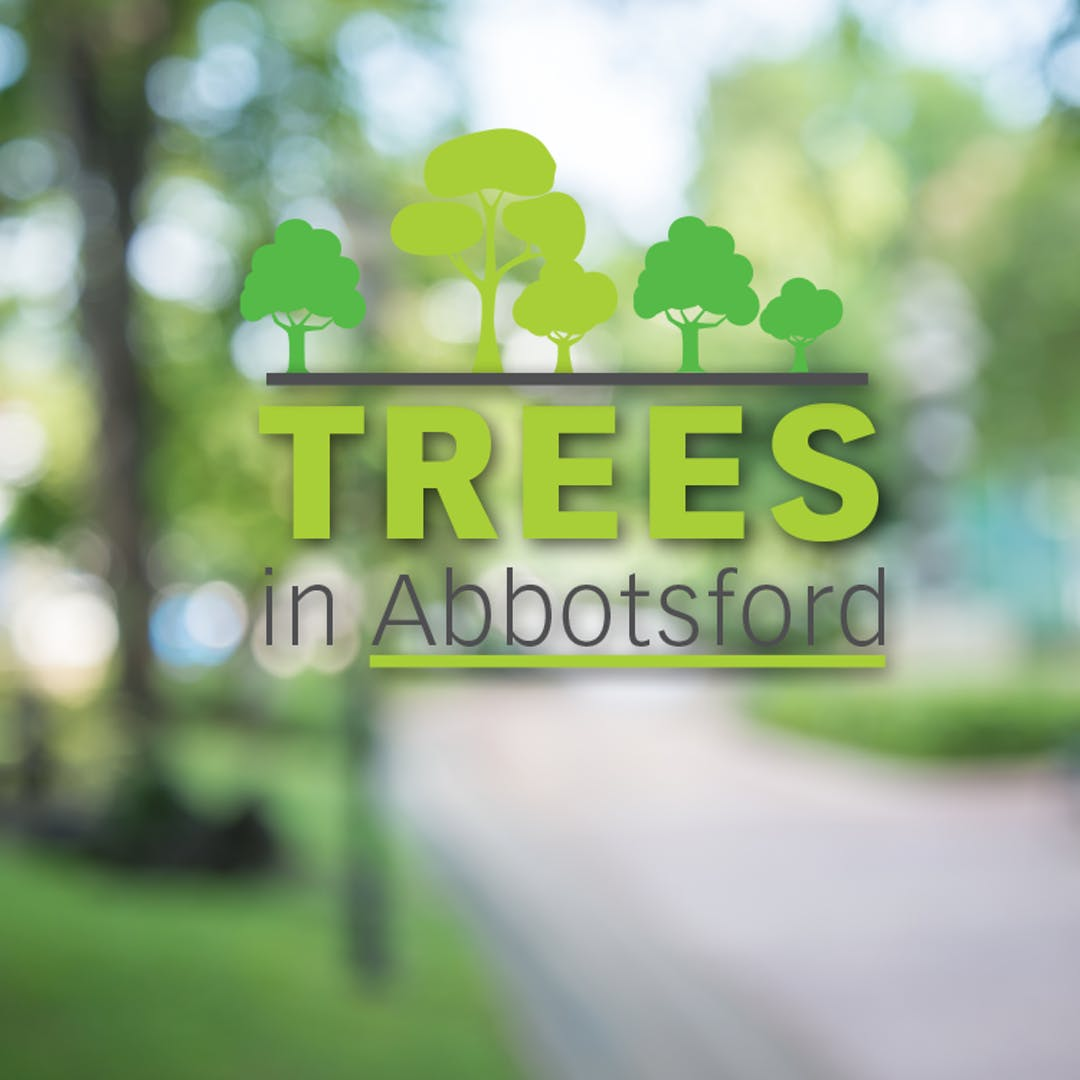 Trees in abbotsford tile