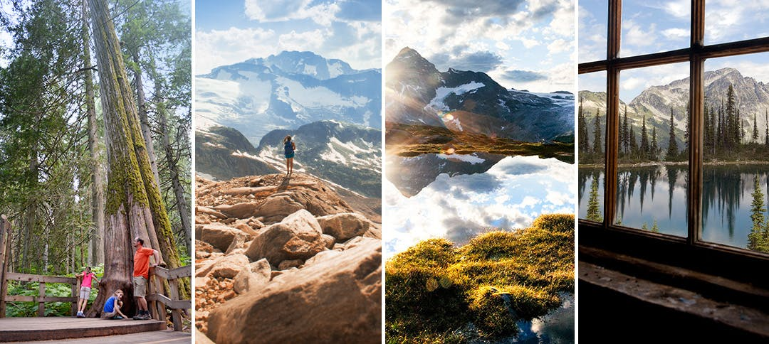 Collage of images from Mount Revelstoke and Glacier national parks